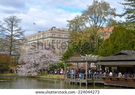 NEW YORK CITY   APRIL 21, 2014: Brooklyn Botanic Garden On A Spring Day
