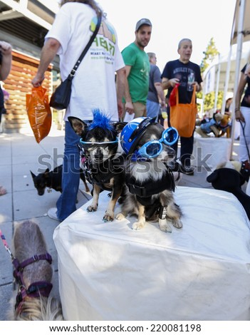 NEW YORK CITY - SEPTEMBER 27 2014: Best Friends Animal Society hosted its annual Strut Your Mutt walk & fundraiser along West Side Hgy followed by an adoption fair on Pier 84. Hipsters in sunglasses