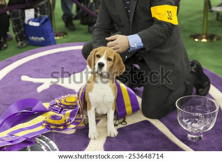 Westminster Dog Show Stock Images Royalty Free Images Vectors Shutterstock