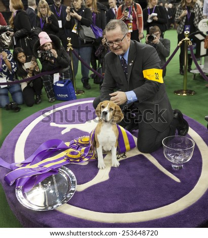 New York, NY - February 17, 2015: Best of Show Hound 15 inch Beagle Miss P poses with handler William Alexandre at 139 Westminster Kennel Club dog show at Madison Square Garden - stock photo