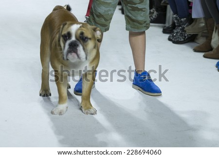 New York, NY - October 19, 2014: Boy walks runway for Clarks design at PetiteParade Kids Fashion week at Bath House Studios