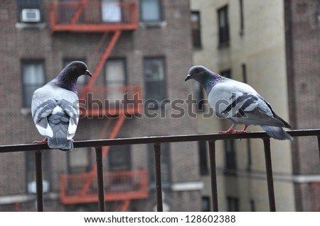 New York Pigeons Sitting on Fire Escape - stock photo