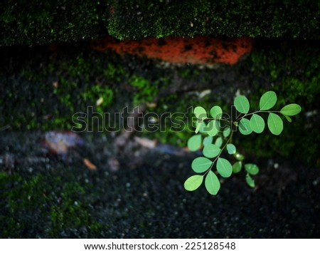 new young light green colorful leaves growing blooming on the floor covered with green moss after rainy week under bright natural sunlight near a pond - stock photo