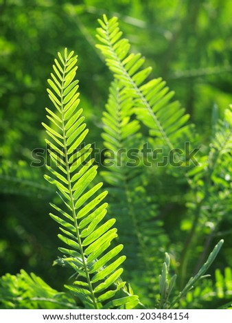 new young light green fern leaves growing after rain under bright natural sunlight outdoor