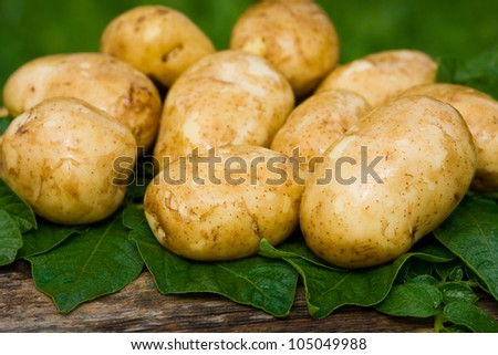 New young potatoes, fresh and tasty - stock photo