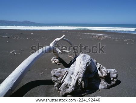 New Zealand, driftwood on beach - stock photo