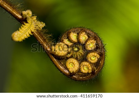 New Zealand fern frond (Koru). - stock photo