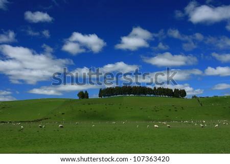 New Zealand green hill - stock photo