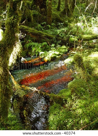new zealand rainforest fresh water lake - stock photo