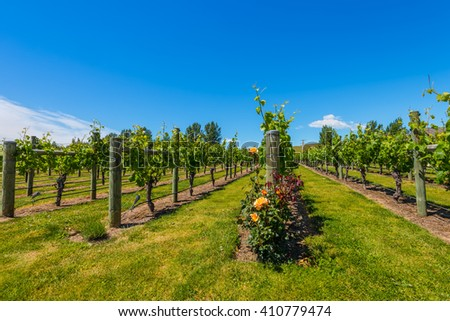 New Zealand's wine country is located in Napier near Hawke's Bay - stock photo