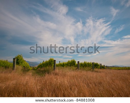 new zealand vineyard with blurred grass and vegetation by long exposure - stock photo