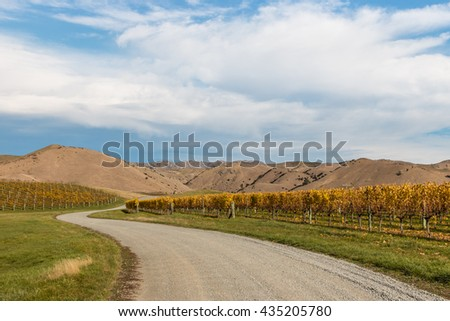 New Zealand vineyards in autumn with copy space