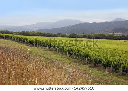 New Zealand - vineyards in the Marlborough district, South Island - stock photo
