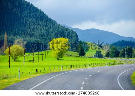 New Zealand Way - stock photo