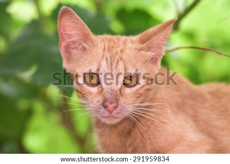 Newborn Baby cat while hiding and looking at you - stock photo