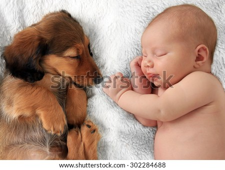 Newborn baby girl  and dachshund puppy asleep on a white blanket. - stock photo