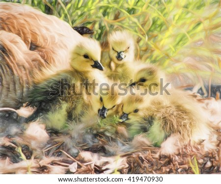 Newborn Canada geese goslings with their mother close by in the background. These geese are one day old. This is computer generated art from a photograph.  - stock photo