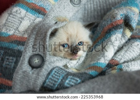 Newborn cat hiding in old pullover - stock photo