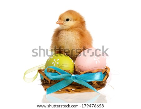 Newborn chick in the nest with easter eggs, isolated on white background - stock photo