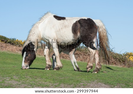 newborn foal suckling milk from mum for the first time - stock photo