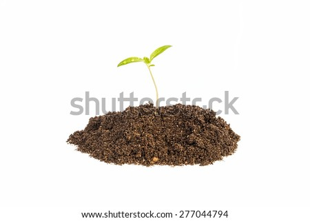 newborn plant on pile of dirt in white background - stock photo