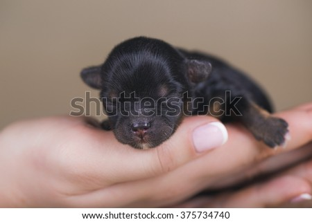newborn puppy - stock photo