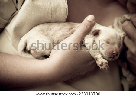 Newborn pups being held by human hands with a vintage tone added