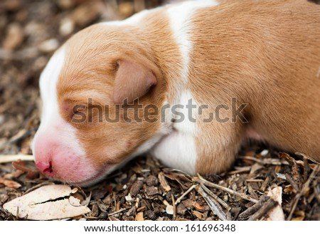 Newborn sleeping dog on the nature - stock photo