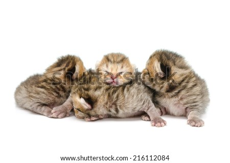 Newborn tabby kitten on white background