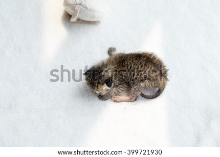 Newborn 1 week cat on white towel