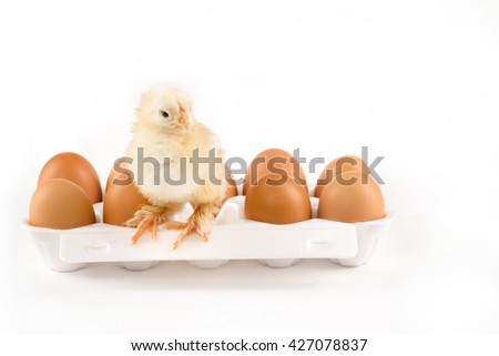 Newborn yellow chick with eggs in the white container