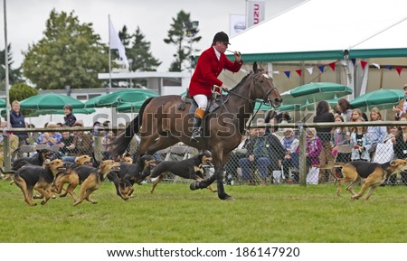 NEWBURY, UK - SEPTEMBER 21: A huntsman riding on horseback demonstrates how to charge the dog pack during a simulated hunt at the Berks County show on September 21, 2013 in Newbury