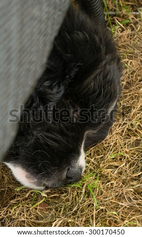 Newfoundland puppy - stock photo
