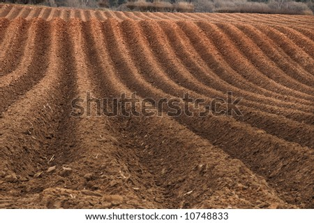 Newly ploughed field ready for new crops