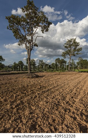 Newly ploughed rice field lite by late afternoon sun. Showing native trees struggling to survive.