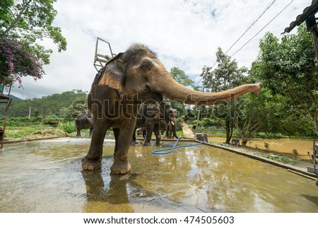 NHA TRANG, VIETNAM - JUNE 23, 2016: Elephant is stretching the trunk in a zoo. Hot summer day in the tropical jungle