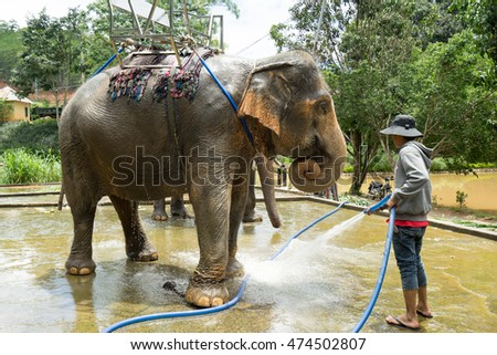 NHA TRANG, VIETNAM - JUNE 23, 2016: The asian man worker of a zoo washes an elephant from a hose before an excursion