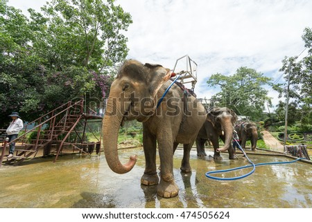 NHA TRANG, VIETNAM - JUNE 23, 2016: The asian man worker of a zoo washes elephants from a hose before an excursion