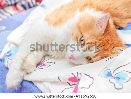 Nice adult red cat thoughtfully lies on bed - stock photo