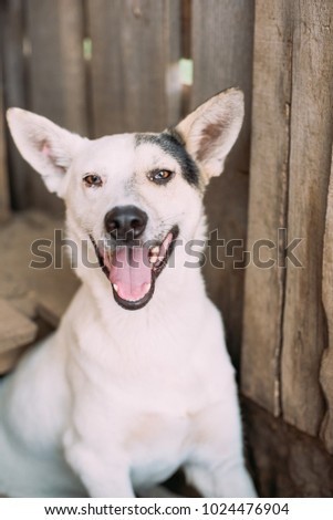 nice and happy dog in dog shelter. Helping homeless animals concept