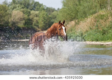 Nice arabian horse running on water - stock photo
