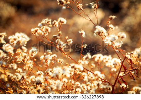 Nice autumn flower meadow - stock photo