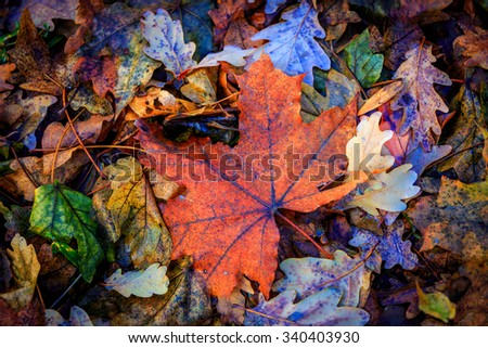 nice autumn leafage - abstract natural background - stock photo