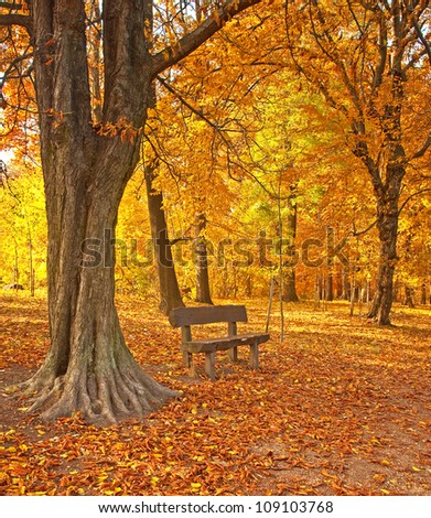 Nice autumnal scene with trees