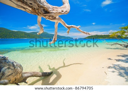 Nice beach with white dead trees - stock photo
