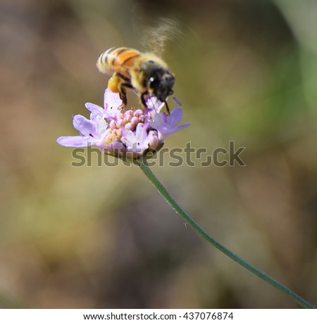 Nice bee flying on a flower