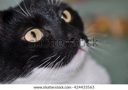 nice black and white cat