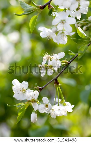 NIce branch with blooming flower with out of focus background