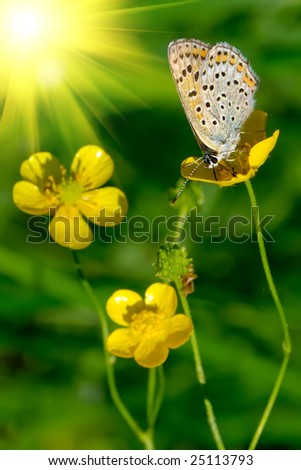 Nice butterfly on a yellow flower. Focus on the butterfly, flowers aren't in focus. Sun in the corner. - stock photo
