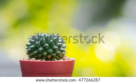 Nice cactus with blurred background